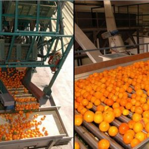 Agrumi-Gel esporta trasformati e succhi di agrumi in cinque continenti