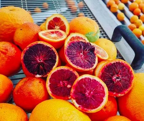 Trasformatori e produttori di agrumi possono sostenersi a vicenda – Freshplaza martedi 31 mar 2020